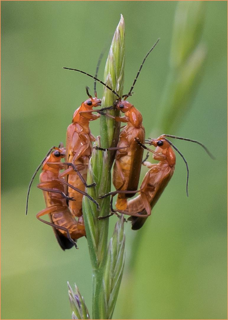 Gruppensex Foto & Bild | tiere, wildlife, insekten Bilder
