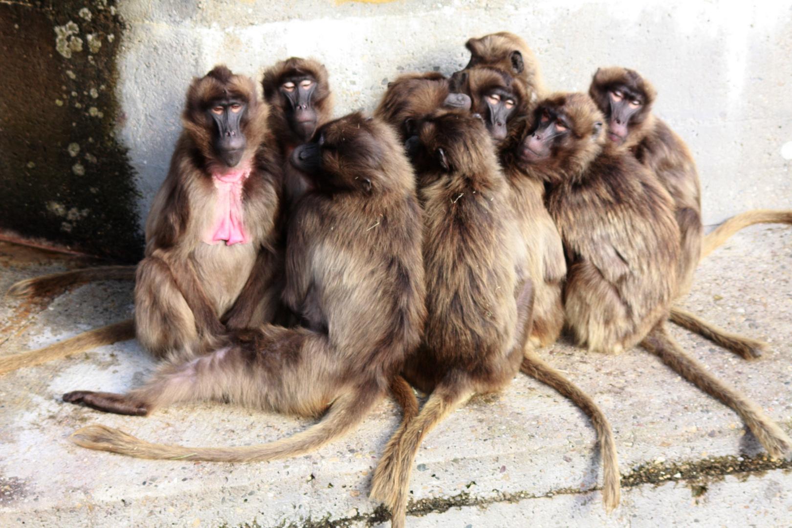 Gruppensitzung