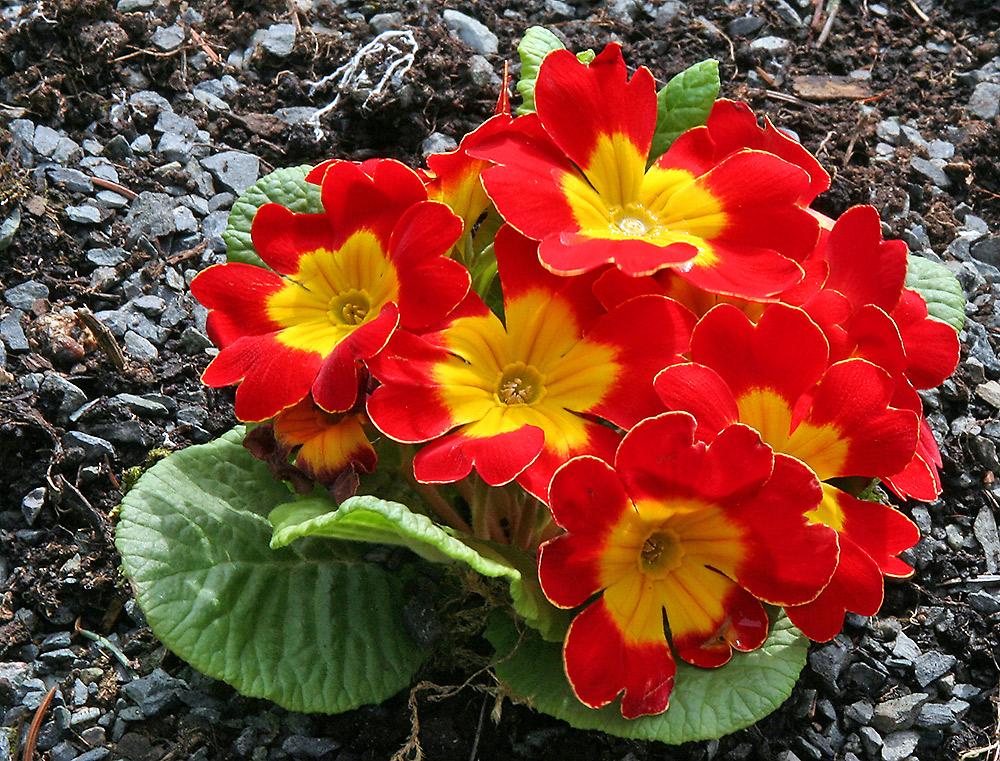 Gruß für den Frühling !