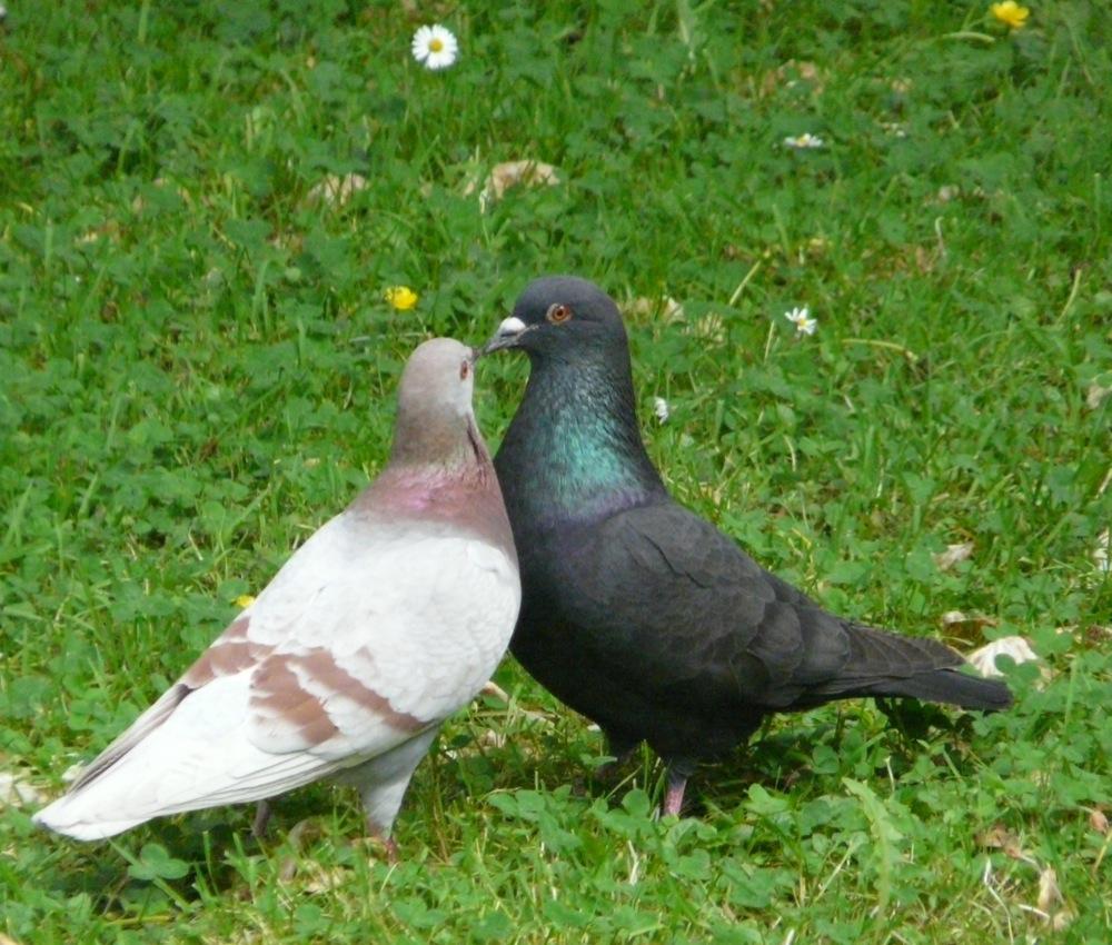 Gruss und Kuss Dein Julius..