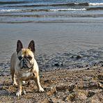 GRZYBOWO - Strandspaziergang mit Amy -