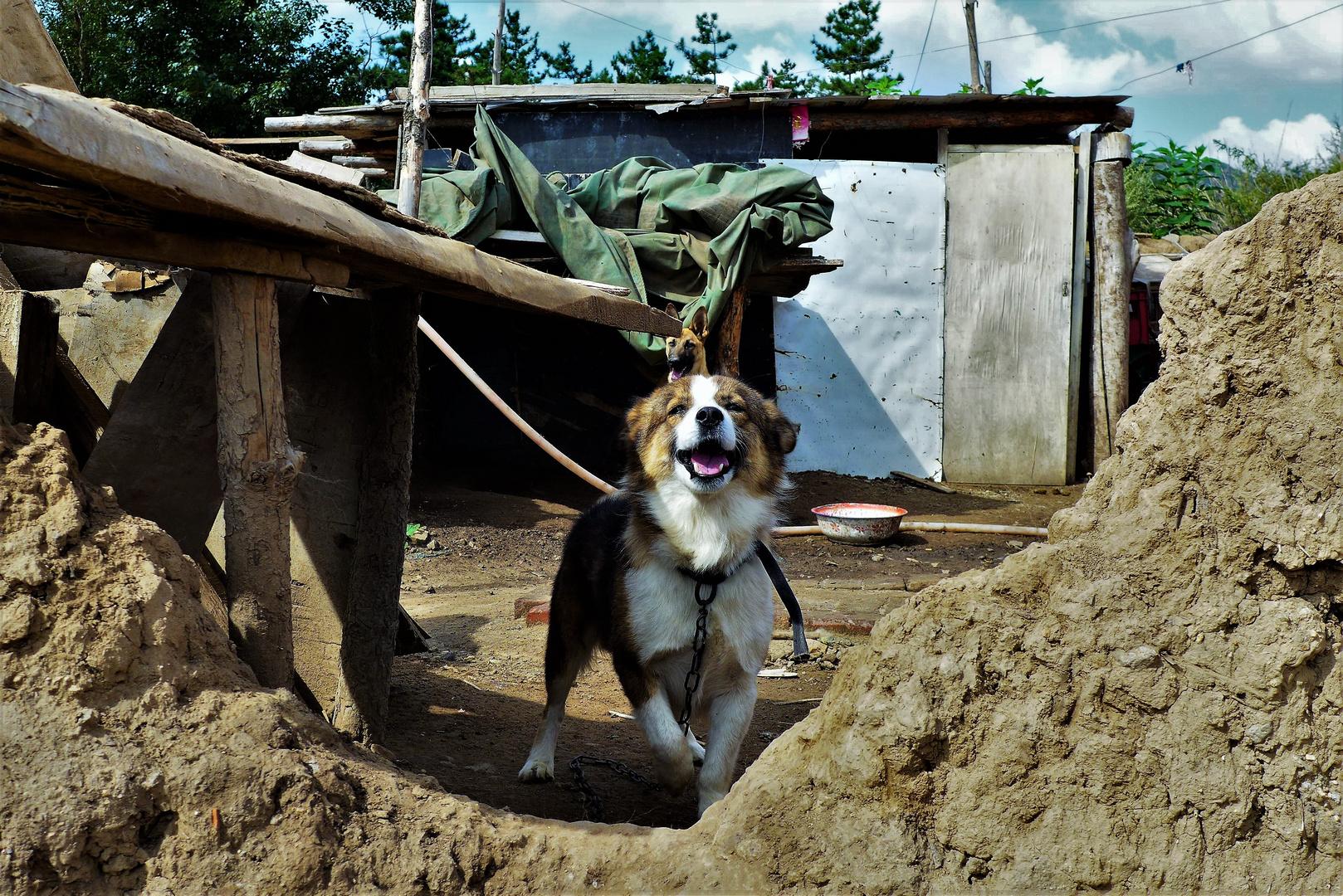 Guard dog!