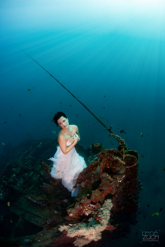 Guardian of the Mola wreck III