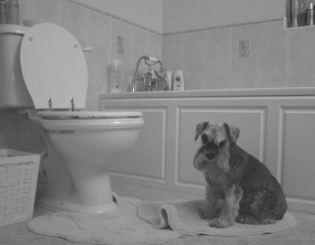 Guarding the toilet