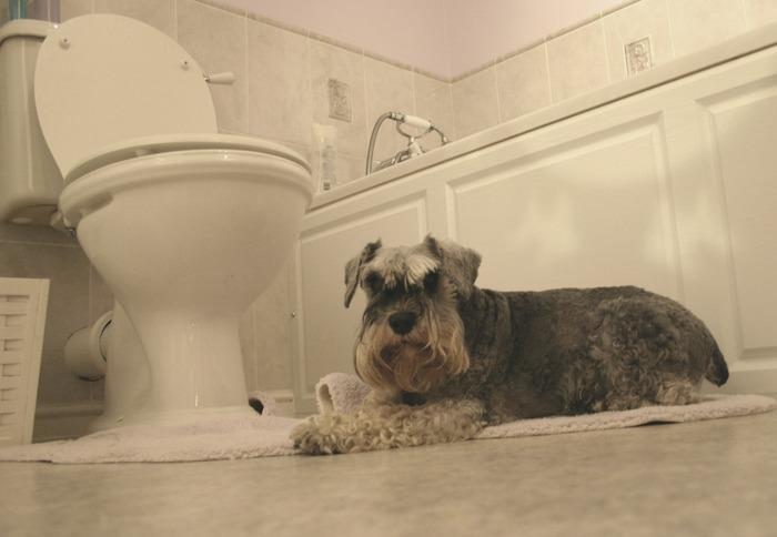 Guarding the toilet II