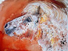 Gucci, - das zauberhafte Pony