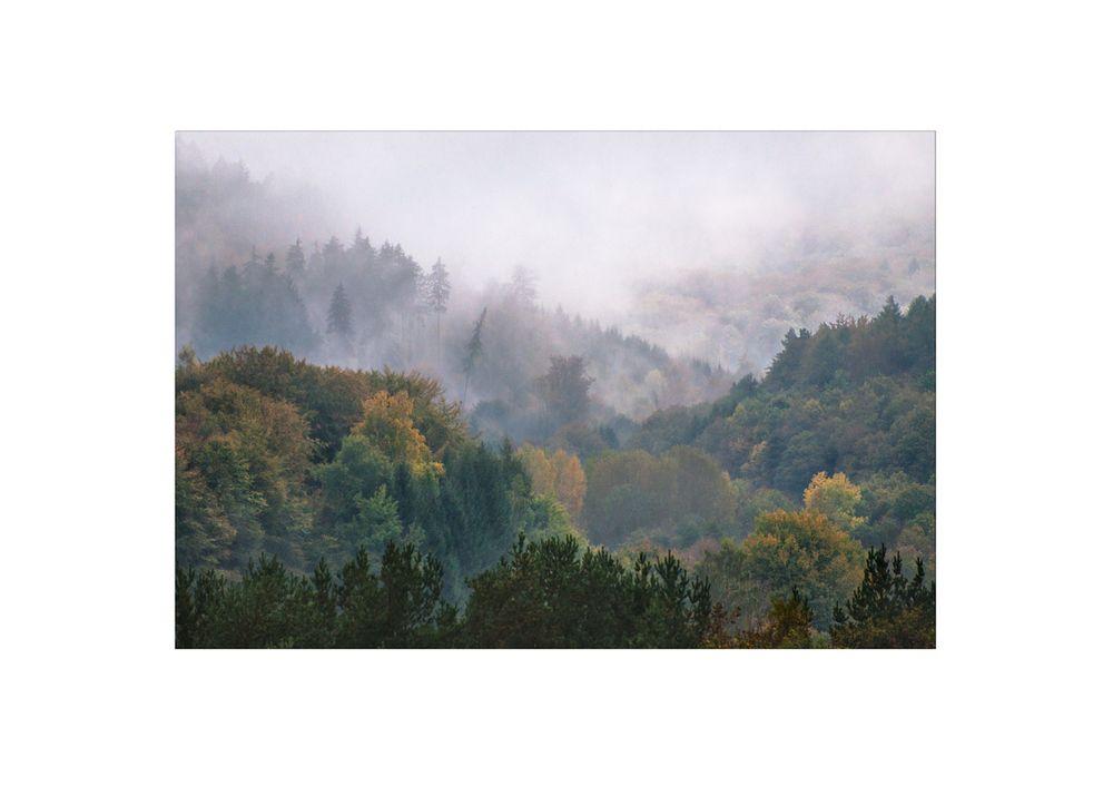 Guckas im Nebel