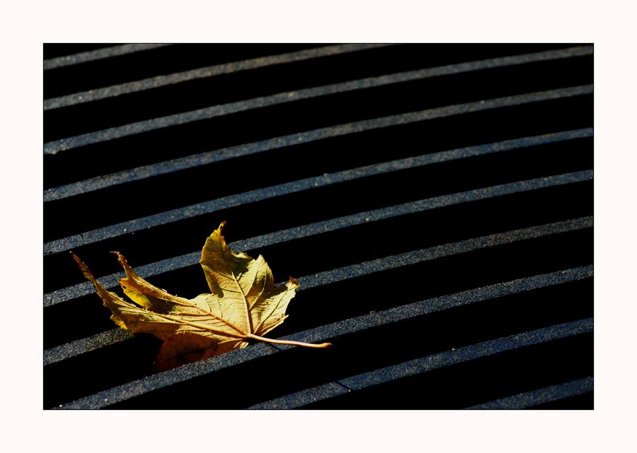 Güld'ner Herbst #2