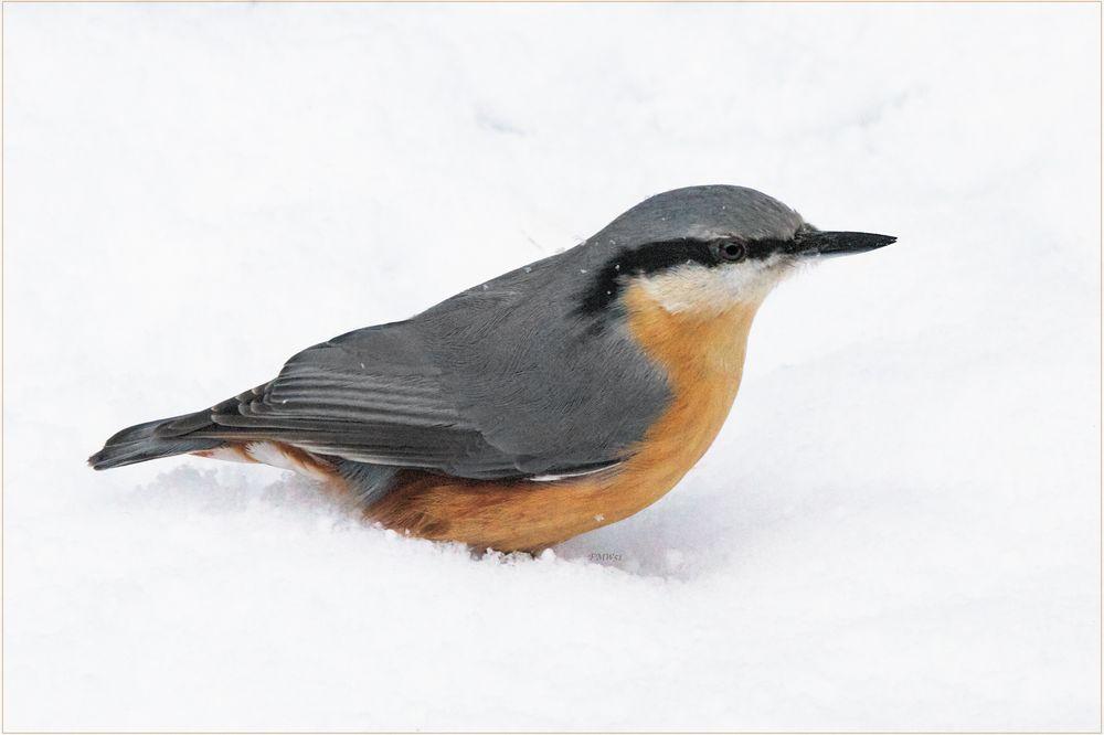Günther im Schnee