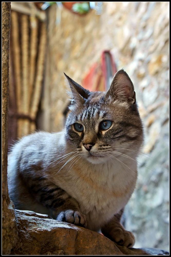 Guida turisti-cat