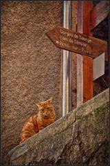 Guida turisti-cat 2
