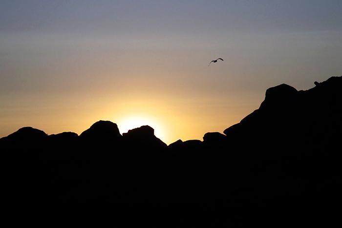 Gull At Dawn