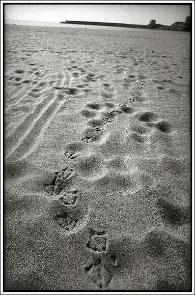 gull walk
