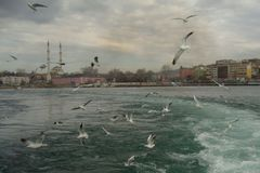 Gulls and the city II