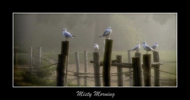 Gulls in the mist