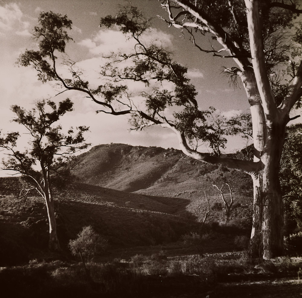 Gum trees and hills
