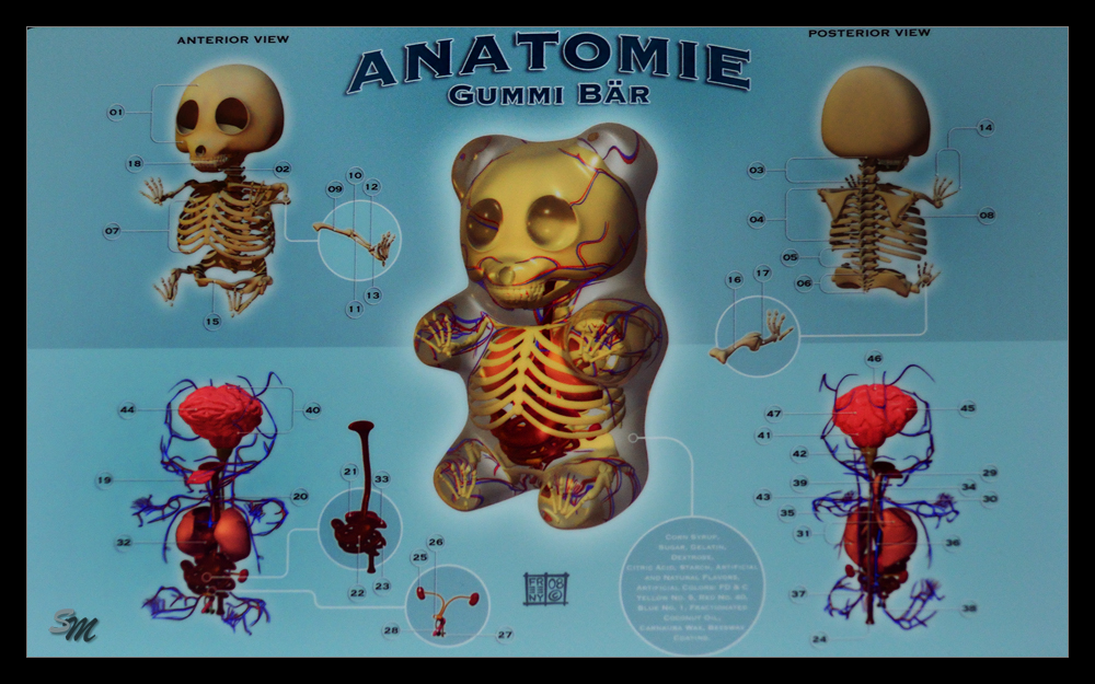 Gummibär Anatomie~ Foto & Bild | reportage dokumentation ...