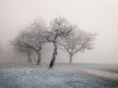 Gurten im Nebel