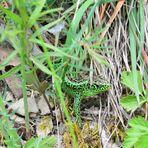 Gut getarnt! Well camouflaged! Bien camuflado!