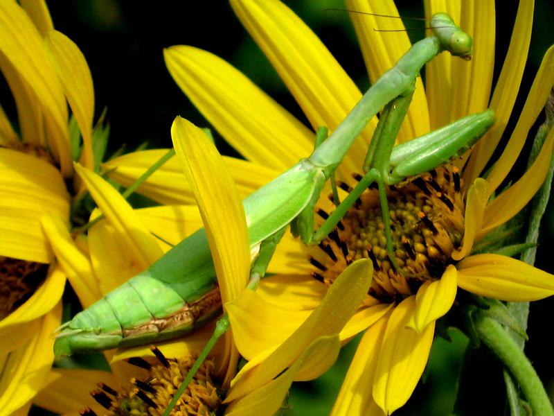 Gut versteckt im Blütenbett