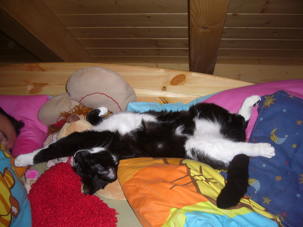 Gute Nacht Edi