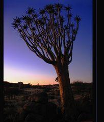 gute Nacht ... Namibia