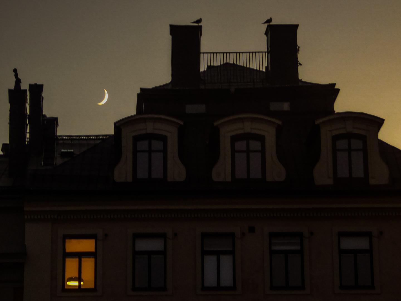 gute Nacht Smokey... gute Nacht Rubie... gute Nacht ...