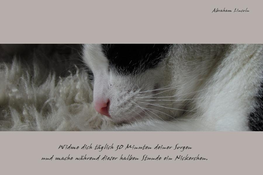 Gute (?) Sprüche   Vol. 2 Foto & Bild | karten und kalender, alles