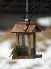 Guten Appetit - Grünfink