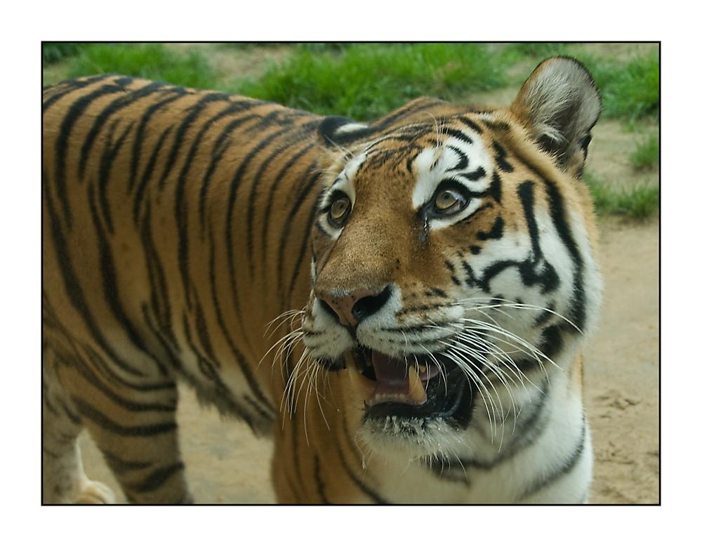 Guten Morgen Foto Bild Tiere Zoo Wildpark