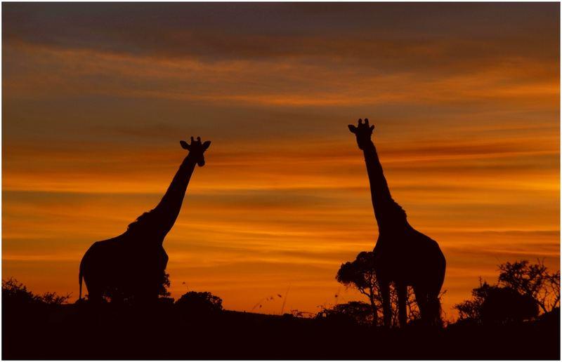 Guten Morgen Afrika Foto Bild Africa Eastern Africa