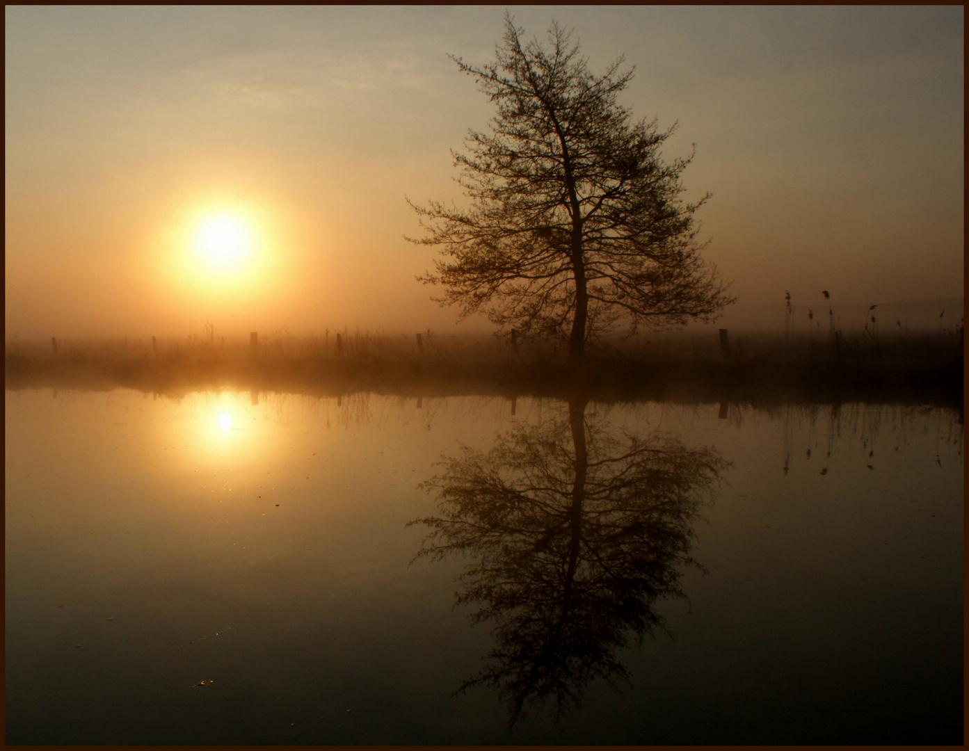 Guten Morgen Foto Bild Deutschland Europe