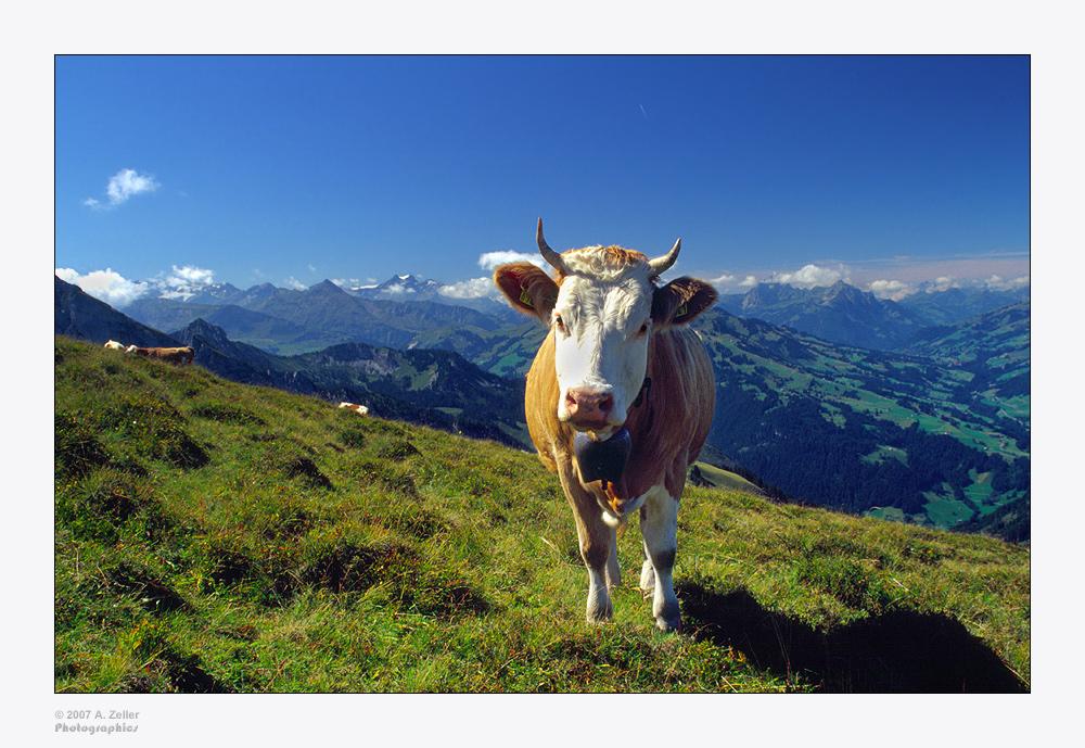 Guten Morgen, Berner Oberland (in Farbe)