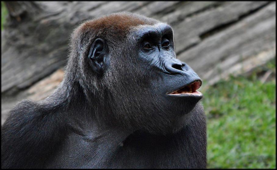 Guten Morgen Bussi Foto Bild Tiere Zoo Wildpark