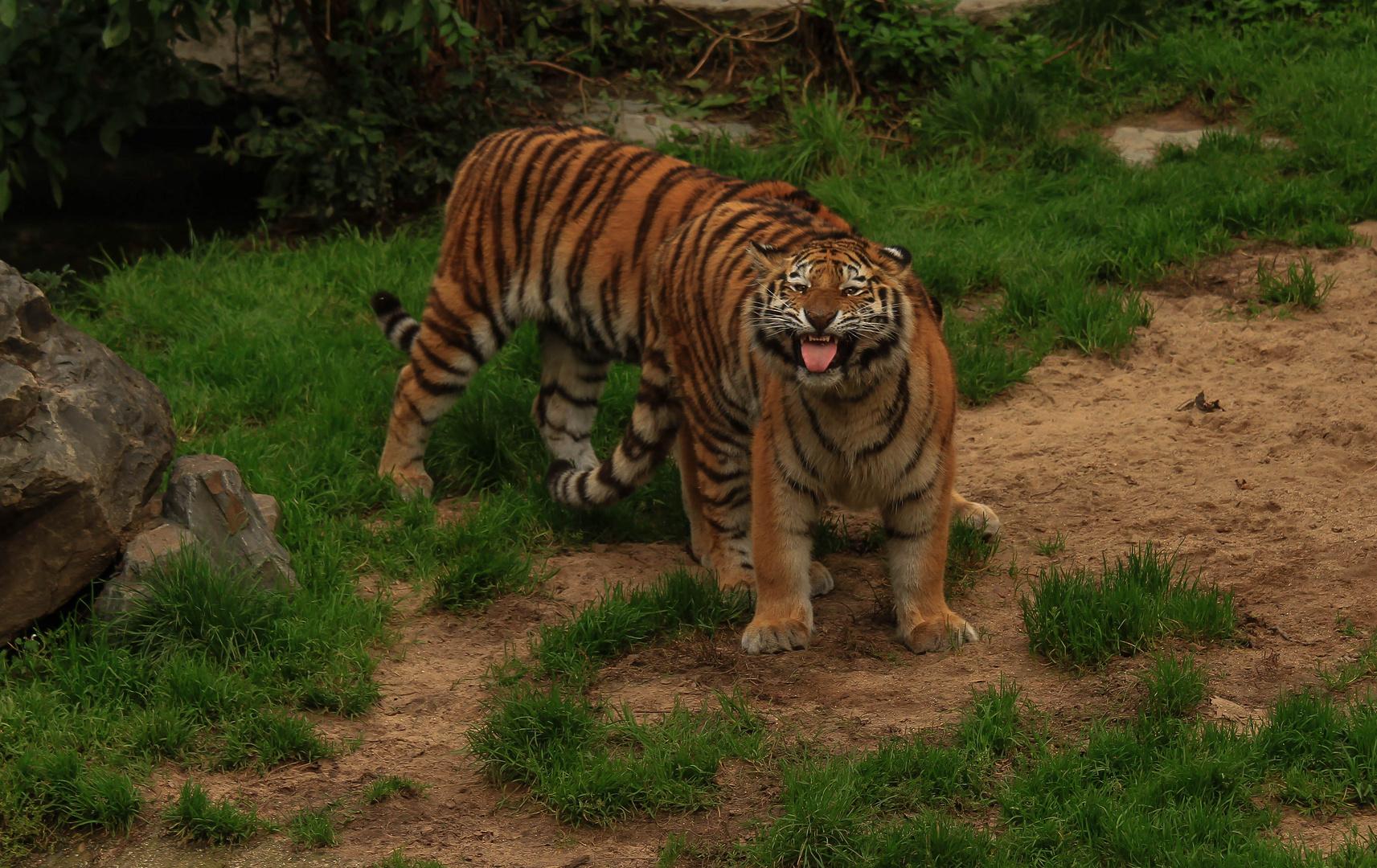 Guten Morgen Foto Bild Tiere Zoo Wildpark Falknerei