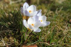 Guten Morgen Frühling
