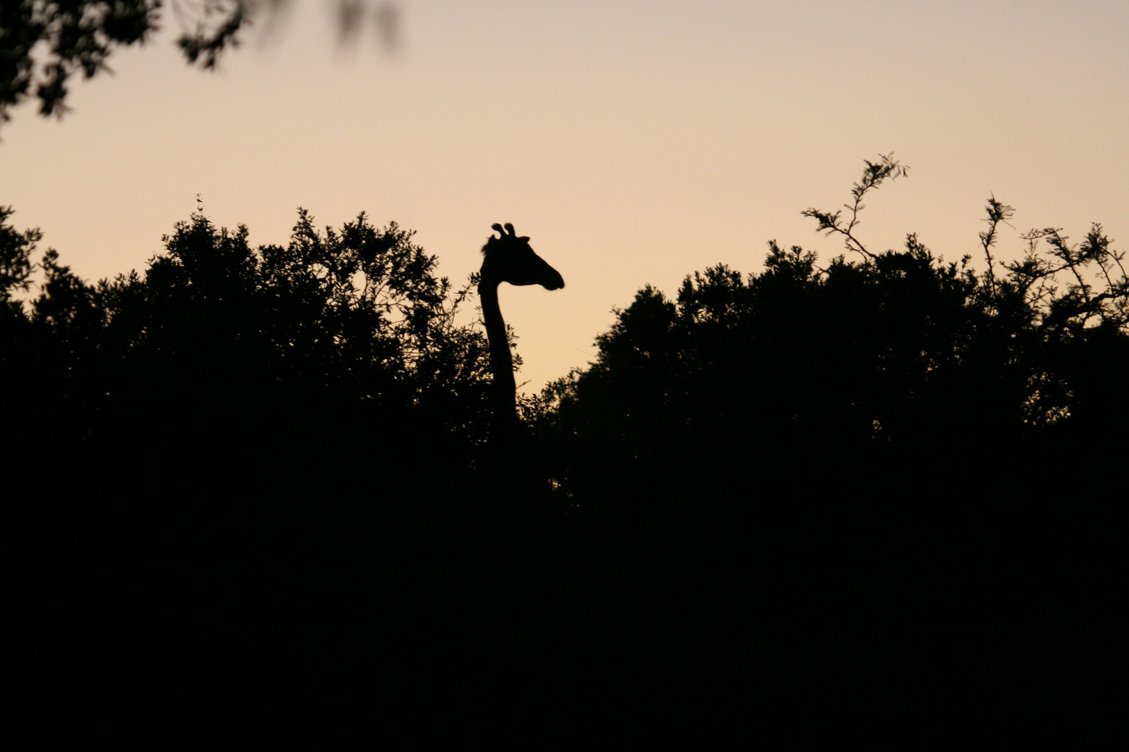 Guten Morgen Giraffe Foto Bild Africa Eastern Africa