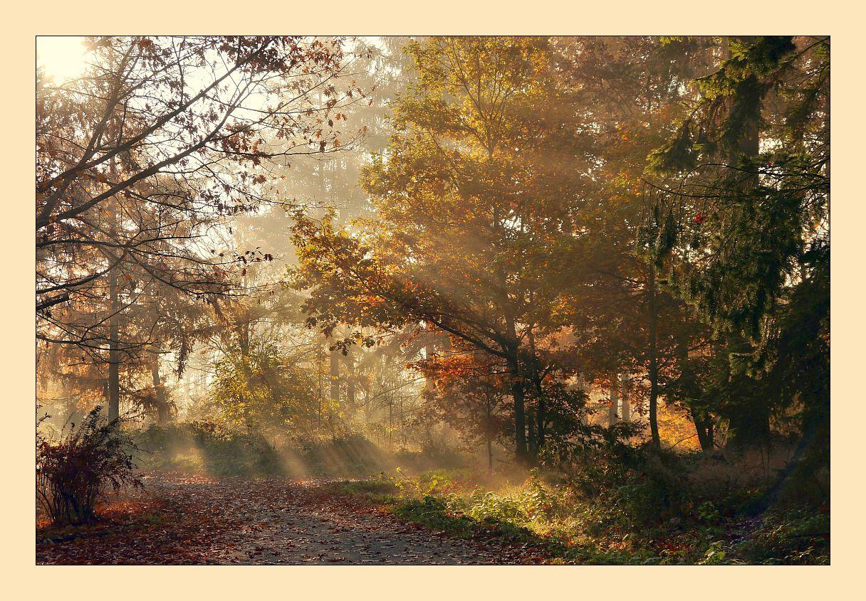 Guten Morgen Herbst Foto Bild Jahreszeiten Herbst Im