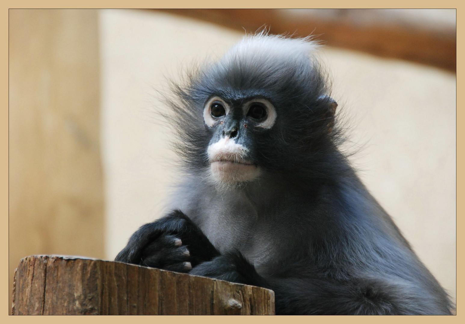 Guten Morgen Herr Lehrer Foto Bild Tiere Zoo