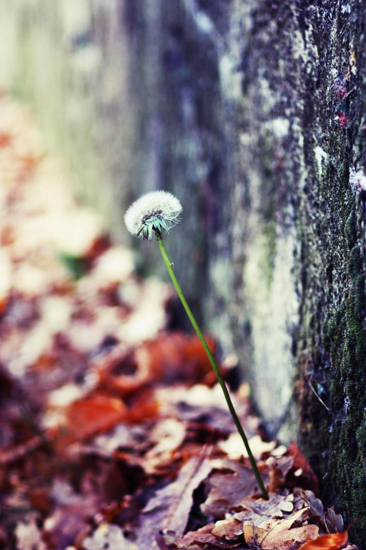 Guten Morgen Kleiner Herbst Foto Bild Plants Fungi