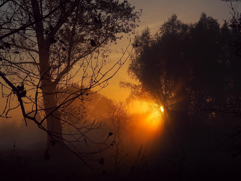 Guten Morgen Liebe Sonne Foto Bild Jahreszeiten Herbst