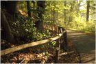 Guten Morgen Märchenwald 4