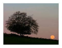 Guten Morgen, Mond - ...und tschüss, ICH geh´ jetzt AUF !
