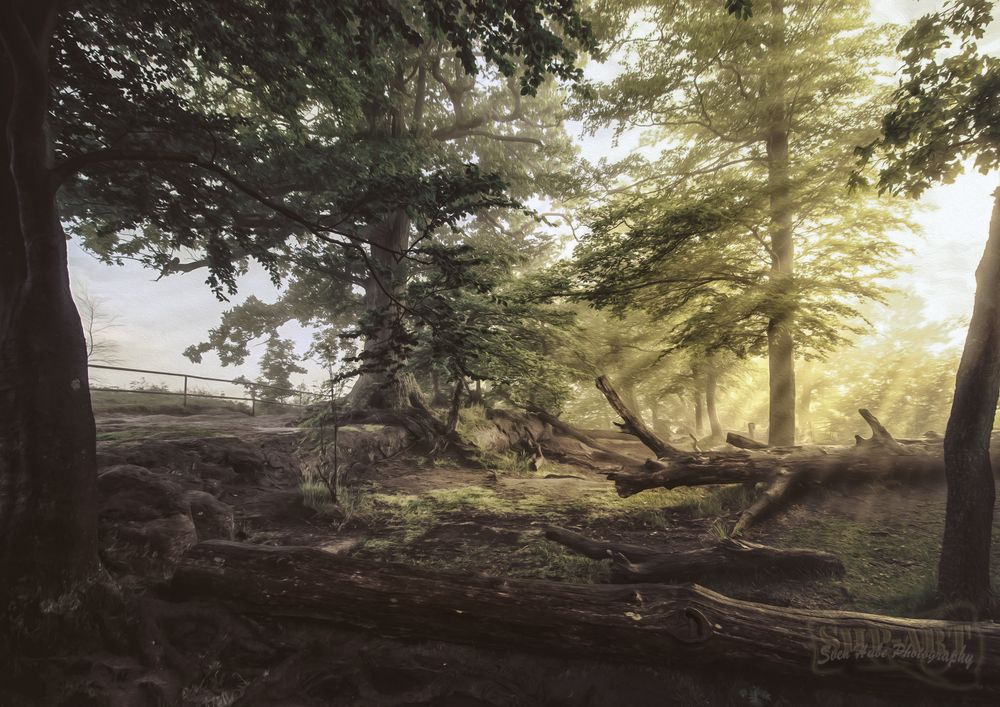 Morgen Bilder Natur