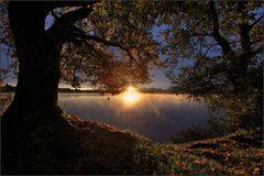 ~ Guten Morgen Sonnenschein ~