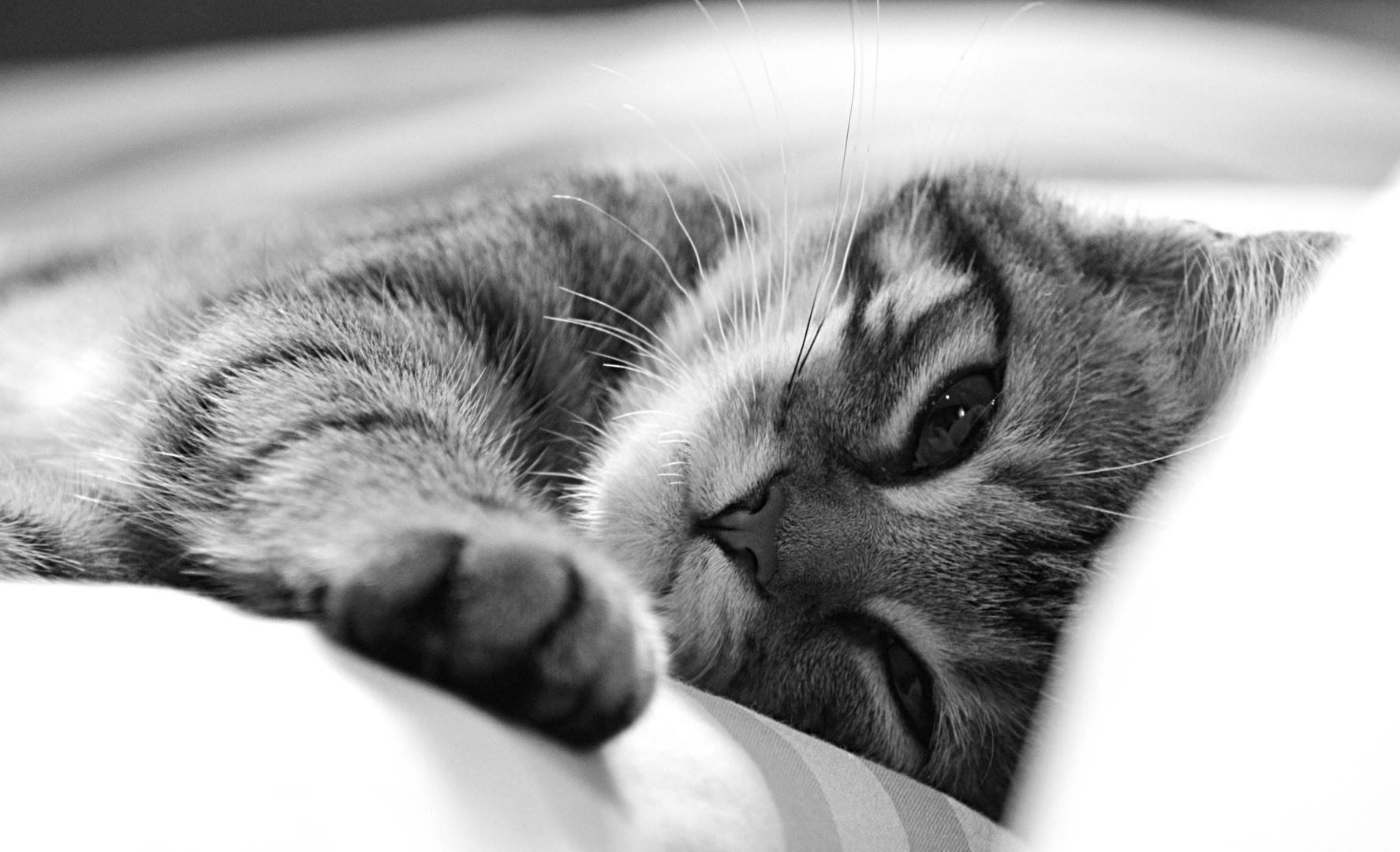 Guten Morgen Sonnenschein Foto Bild Tiere Haustiere