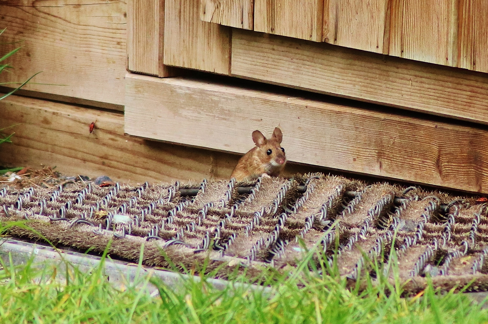 Guten Morgen Von Mausi Foto Bild Wildlife Natur Bilder