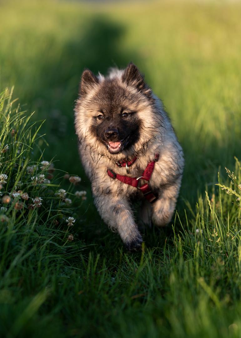 Guten Morgen Welt Foto Bild Tiere Haustiere Hunde
