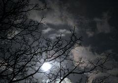Guter Mond, Du gehst so helle......