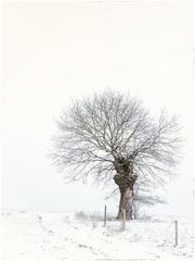 .Guter.Baum.